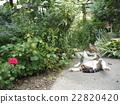 猫 猫咪 小猫 22820420