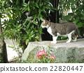 猫 猫咪 小猫 22820447