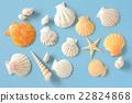 贝壳 外壳 壳 22824868