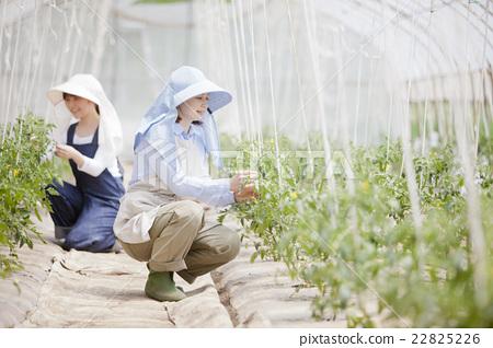 농가의 가족 22825226