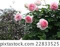 玫瑰 玫瑰花 触控仿古玫瑰 22833525