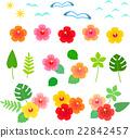 槿 花朵 花卉 22842457