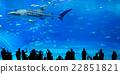 Silhouettes of people in Oceanarium 22851821