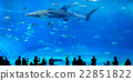Aquarium 22851822