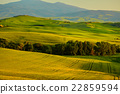 View of green fields at sunset in Tuscany 22859594