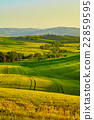 View of green fields at sunset in Tuscany 22859595