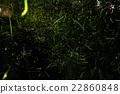 firefly, lightning, bug 22860848