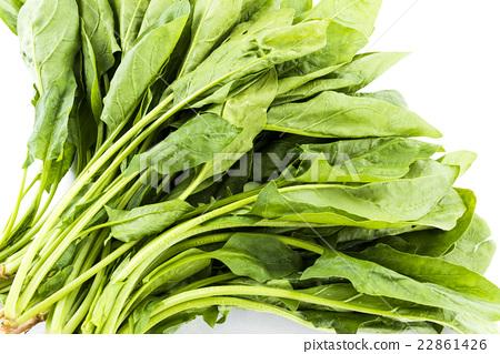 一束菠菜 22861426