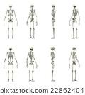 骨架 CG 框架 22862404