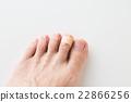 爪子 英尺 腳 22866256