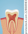 Tooth sheme icon 22868983