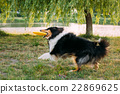 dog, outdoor, play 22869625