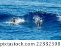 Dolphins while jumping in the deep blue sea 22882398