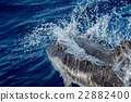 Dolphin while jumping in the deep blue sea 22882400