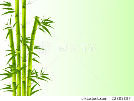 Bamboo background 22885887