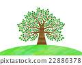 wood, large, tree 22886378