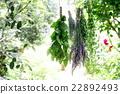 aroma, aromatherapy, herbal 22892493