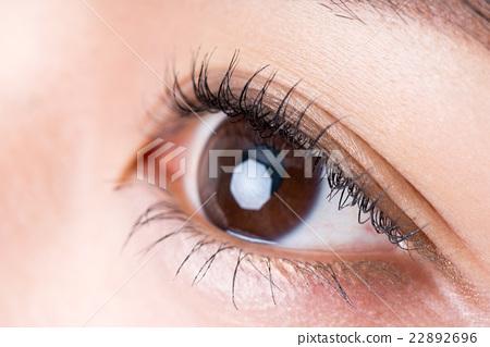 瞳孔 22892696