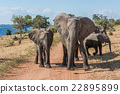 Dirt track blocked by family of elephants 22895899