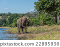 Elephant giving itself dust bath beside river 22895930