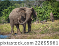 Elephant squirting mud over itself beside river 22895961