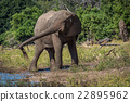 Elephant squirting mud with trunk beside river 22895962