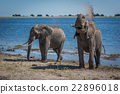 Elephant throwing mud over shoulder beside river 22896018