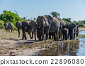 Herd of elephants walking along sunny riverbank 22896080