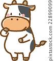 วัว,สัตว์,ภาพวาดมือ 22899099