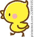小雞 22899105