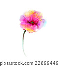 Watercolor painting poppy flower 22899449