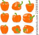 vegetables pepper paprika 22906544