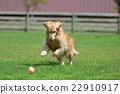 動物 玩 狗 22910917