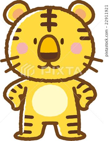 老虎 虎 動物 22911921