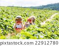 child, field, kids 22912780