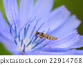蟲子 漏洞 昆蟲 22914768