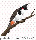 Red whiskered bulbul bird 22915573