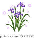 violet iris ayame flower illustration vector 22916757