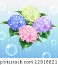 4 colour hydrangea ajisai flower illustration  22916821