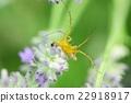 蜘蛛 昆蟲 漏洞 22918917