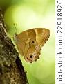蝴蝶 蟲子 漏洞 22918920