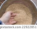 糙米 高粱米 手 22922851