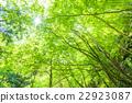 翠綠 鮮綠 嫩葉 22923087