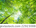 翠綠 鮮綠 葉子 22923088