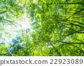 翠綠 鮮綠 嫩葉 22923089