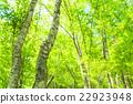 翠綠 鮮綠 嫩葉 22923948
