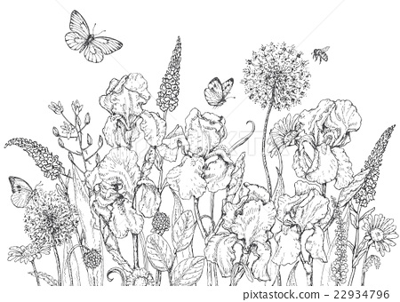 Iris, wild  flowers and insects sketch 22934796