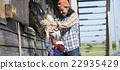 爱抚 马儿 马 22935429