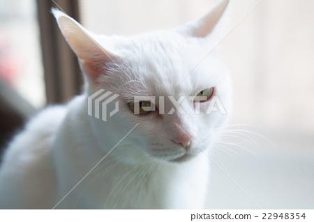 猫 猫咪 小猫 22948354