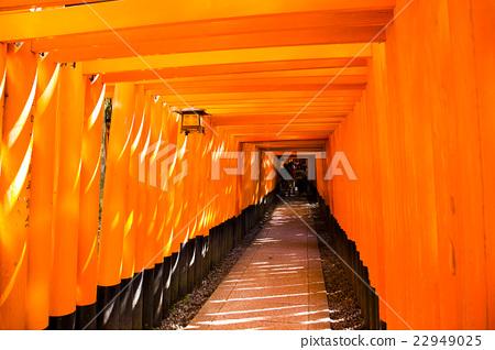 Senbon Torii, Fushimi-Inari Taisha Shrine, Kyoto 22949025